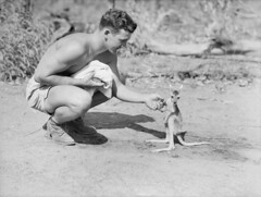 An American soldier with a joey, 1942