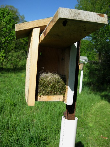 Chickadee Nest