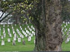 American Civil War Graves