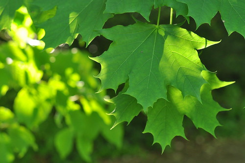 green leaves 1