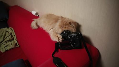 loving camera