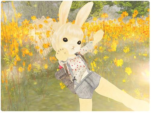 ohmai_bunny