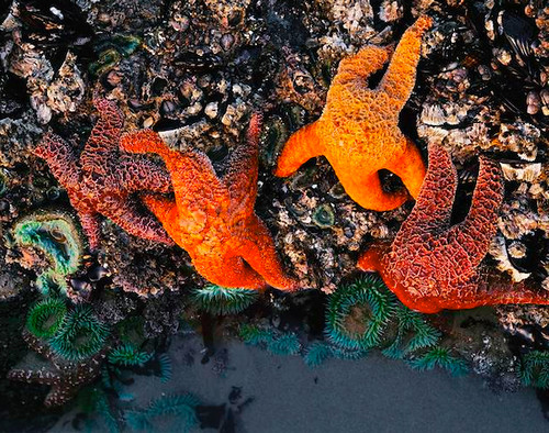Photo of the tidepools taken by pacific crest mike posted on flickr