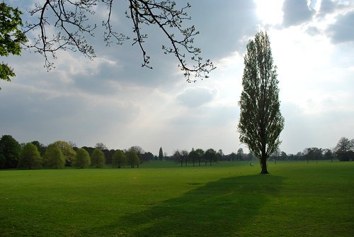 Imposing tree in Eltham Park