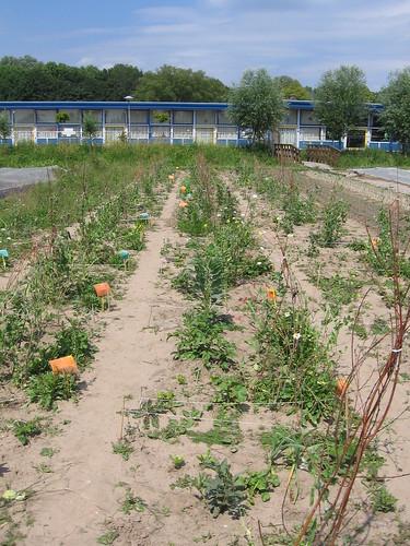Vierkante meter schooltuintjes