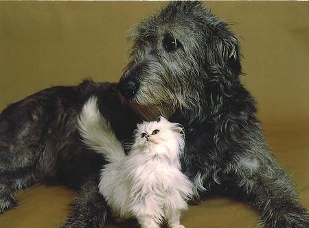 dog-cat-2