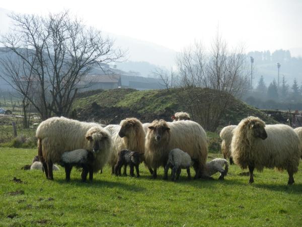 Foto 3 - Las ovejas nos acompañan en esta parte del camino