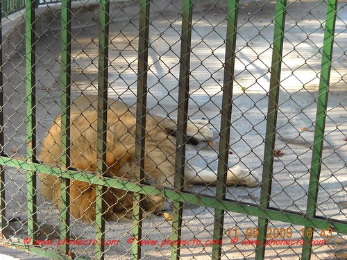 phonecto.com Leul de la Piatra Neamţ