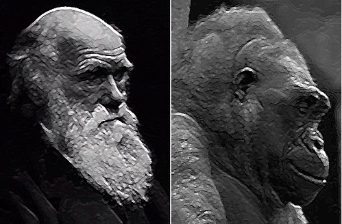 charles darwin e il gorilla, separati alla nascita