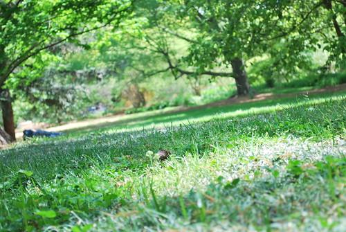 naptime in the arboretum