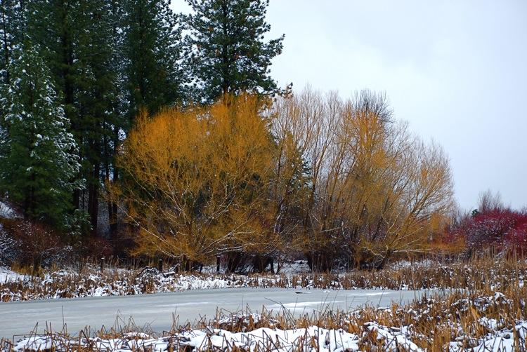 Spring trees...Winter pond.