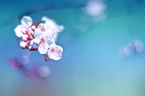 Spring Like