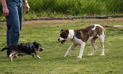 Dog Park_2009-02-28_IMG_2421.JPG