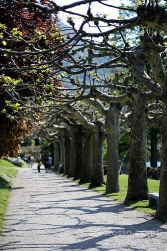 Plane-tree drive, Villa Melzi Gardens, Bellagio, Lake Como, Italy