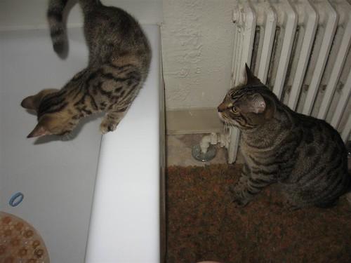 twocats5
