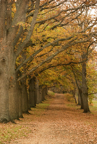 Autumn_Avenue via Flickr