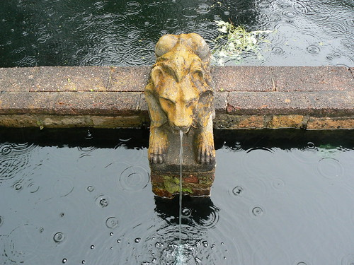 Norfolk Botanical Gardens - Lion and Rain Droplets From Above (Far)