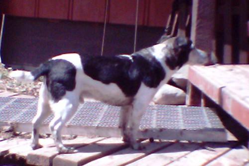 Farm Dog by Sophia - Little Tikes Camera