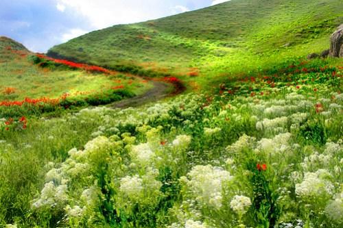 Paradise in Iran Mashhad2