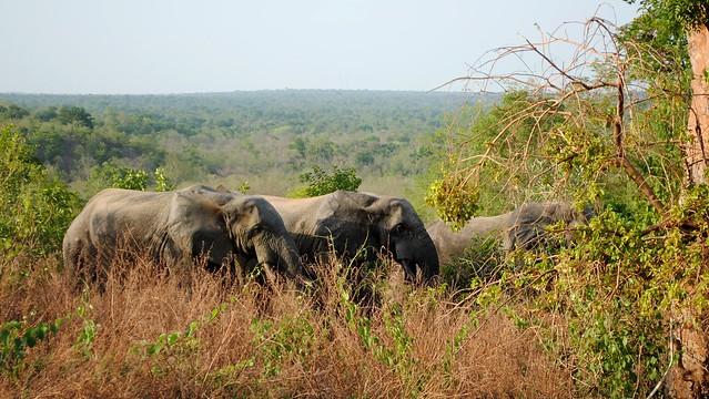 Elephants having some breakfast