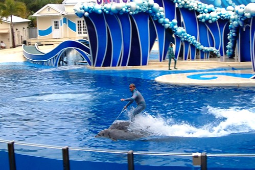 Dolphin Rodeo