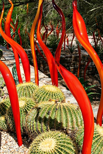 Flames and barrel cacti.