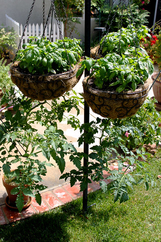 Basil-Over-Tomatoes