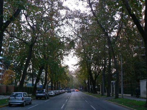 Calle arbolada