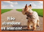 abandono_caozinho
