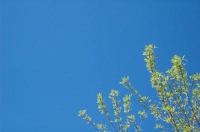 Undeniably Spring
