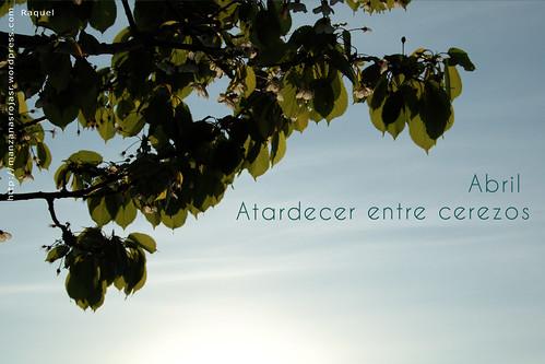 Atardecer entre cerezos