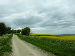 The Ridgeway in spring