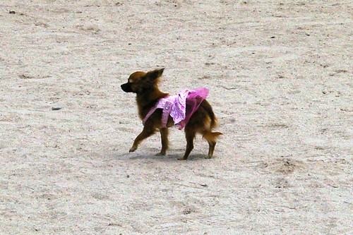 Derry Dog park