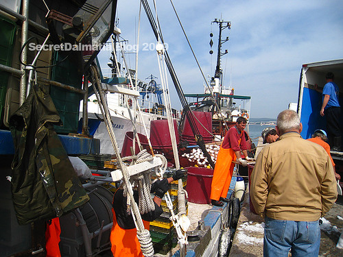 Fishing boats are back...