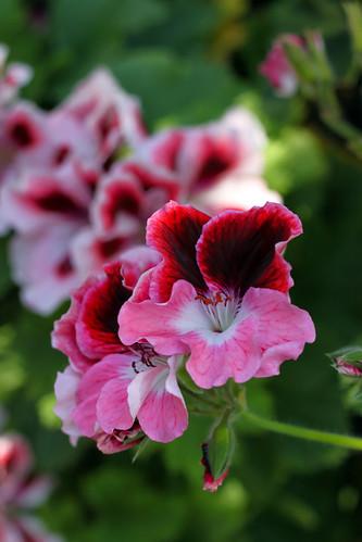 MW-Blossoms