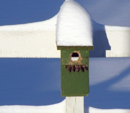 green birdhouse in snow