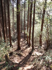 Hakone, old trail run