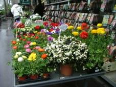 Fleuriste à Paris