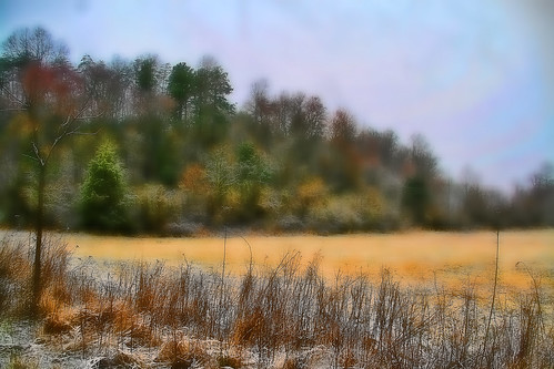 Impressionist Fields and Wood