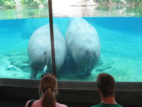 Hippo Bum Inspectors (HBI)