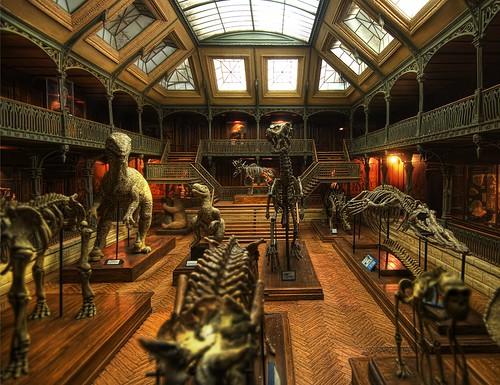 The Great Dinosaur Museum Mystery by Stuck In Customs