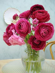 ranunculus for the kitchen
