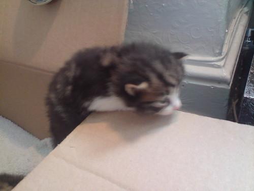 Emo-kitty escape!