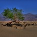 Mesquite Flats Sand Dunes [02] by LMD64