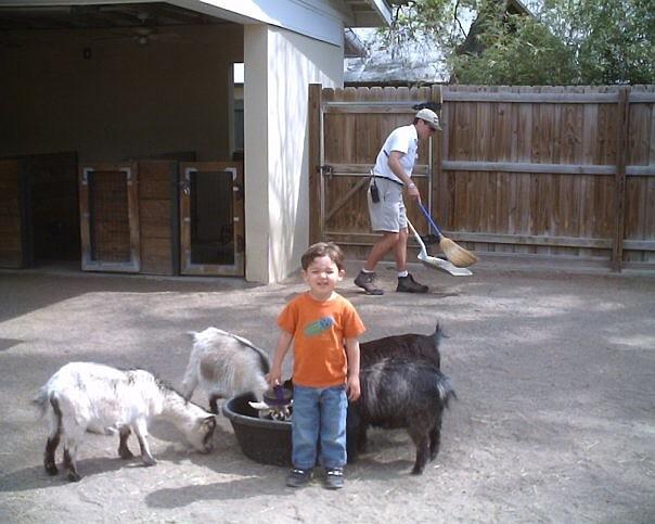 nicky zoo