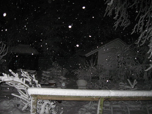 Snow at 4 a.m. in the Back Forty