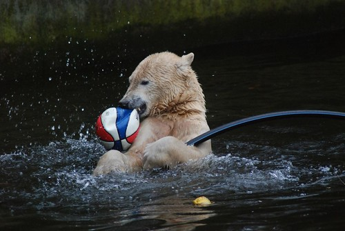 Knut und sein Spielzeug