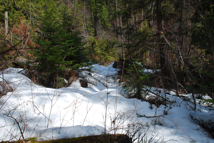 Snow on the Munson Creek trail