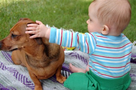 Dachshund shows he's good with small children