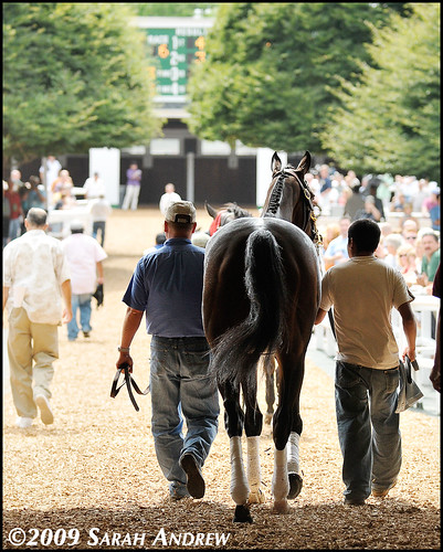 Rachel Alexandra enters the Monmouth Park paddock